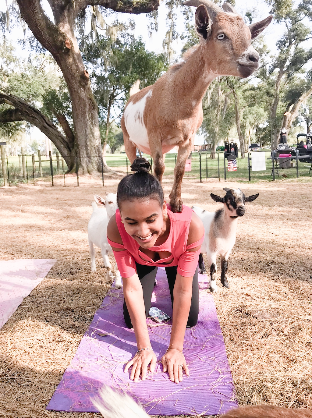 get of out your comfort zone goat yoga